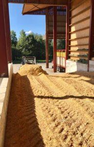 Récolte maïs GAEC le Champenois